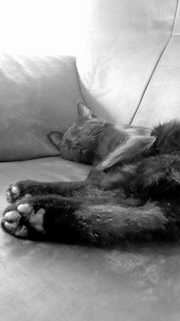 milord - Milord, chaton noir né le 01/05/2016 Img_2113