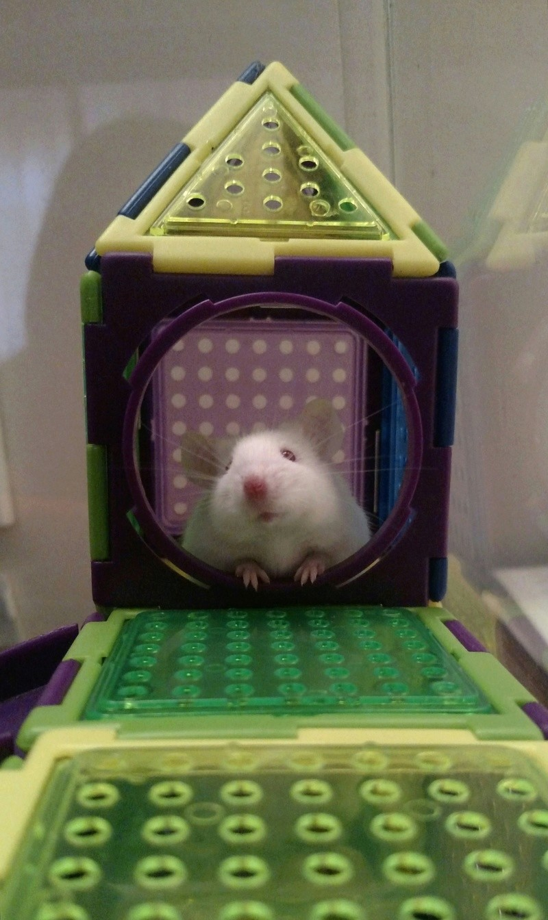 Post your pics for Mouse of the Month!!! - Page 2 Img_2015
