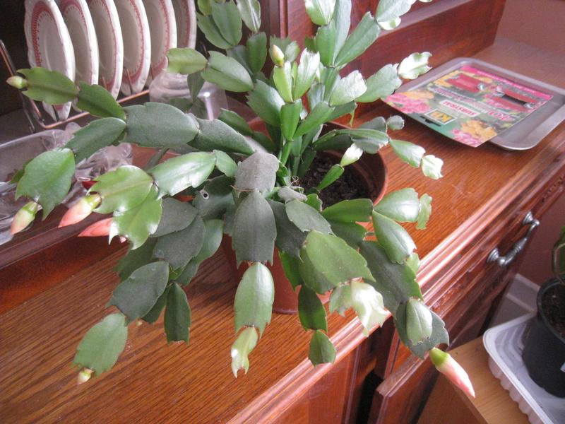 les fleurs 00710