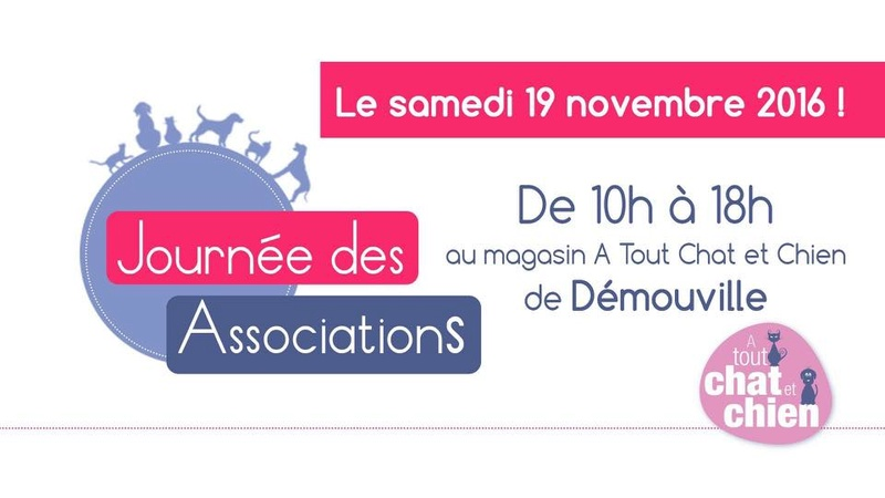 Associations day / jour des associations  15055610
