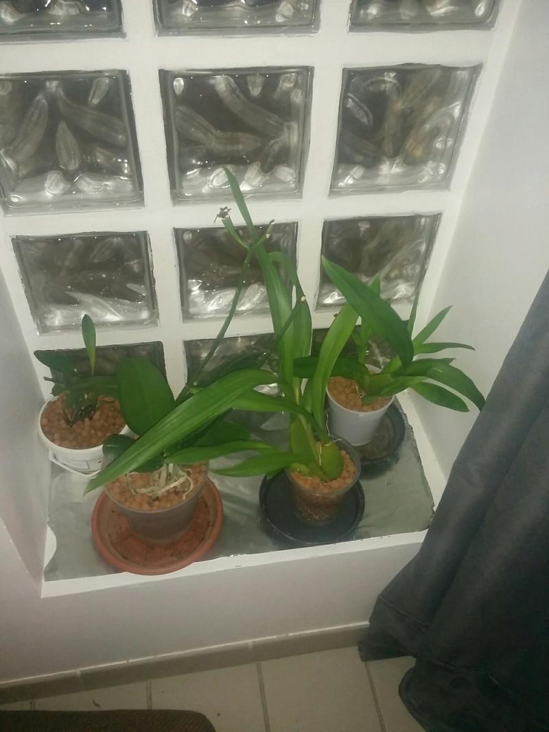 16 orchidé dans 19 m carré Img_110