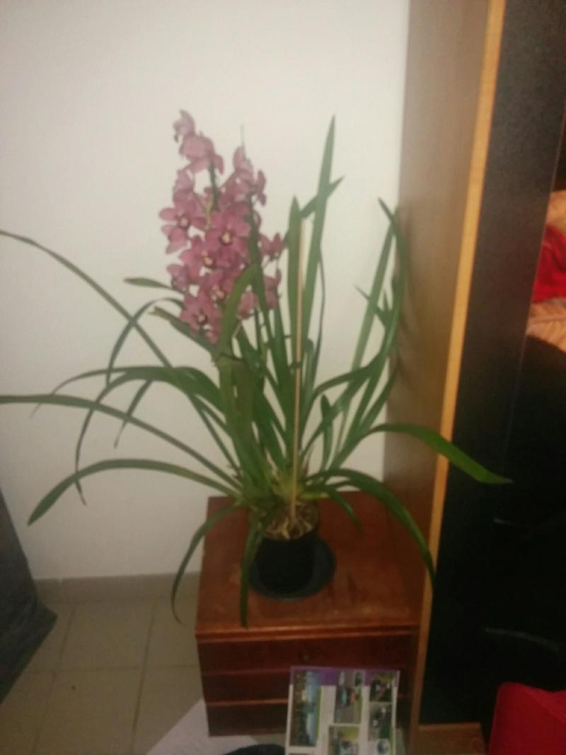 16 orchidé dans 19 m carré Img_210