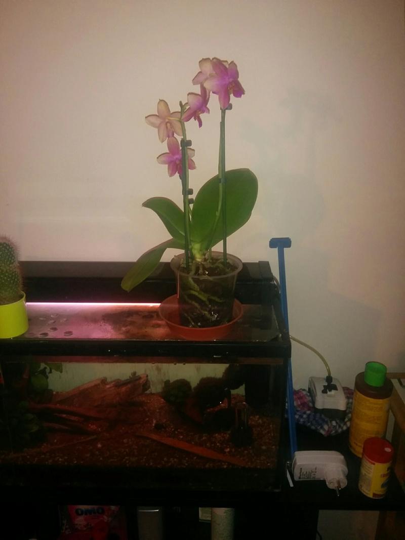 16 orchidé dans 19 m carré Img_310