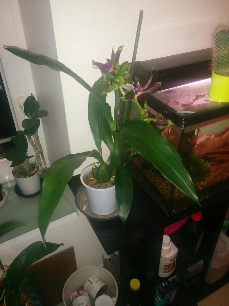 16 orchidé dans 19 m carré Img_410