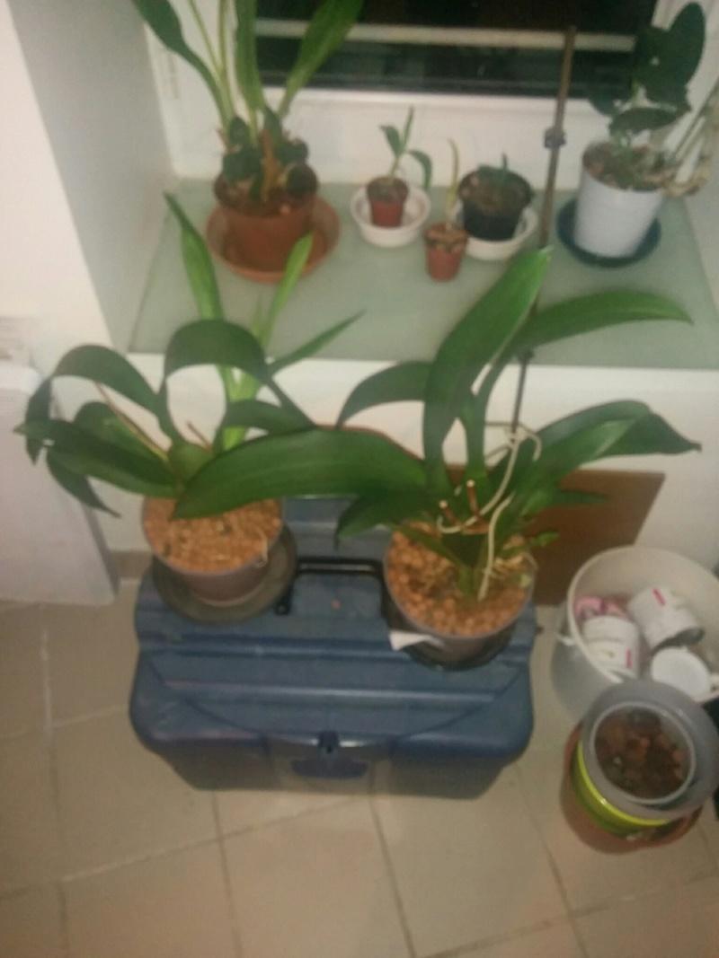 16 orchidé dans 19 m carré Img_510