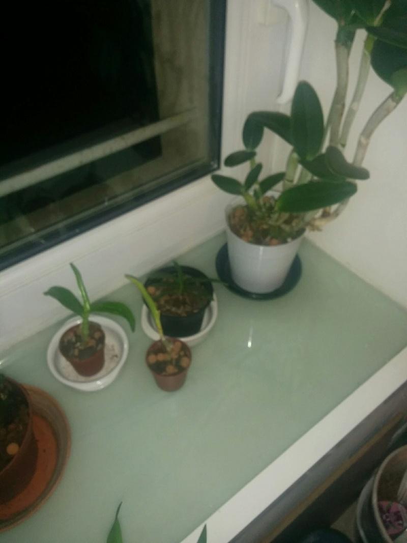 16 orchidé dans 19 m carré Img_610