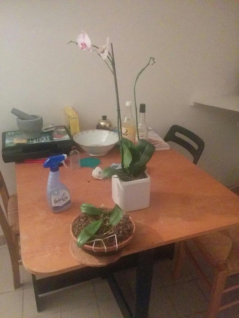 16 orchidé dans 19 m carré Img_810