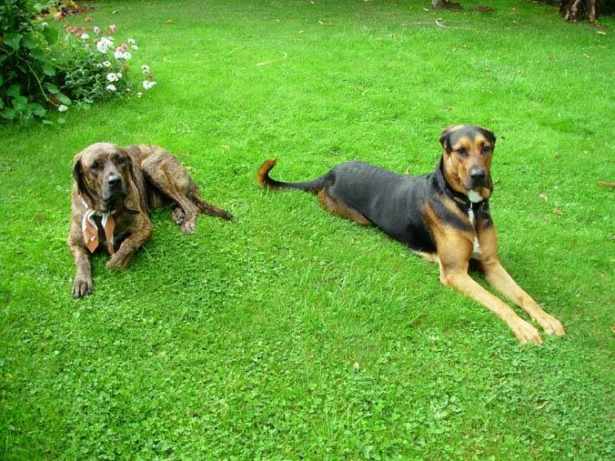 Hommage aux chiens Maous_10