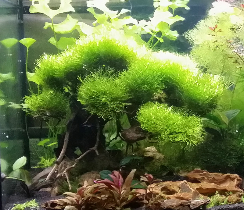 Le Christiany, l'aquarium pour les Guppys Bonsai10