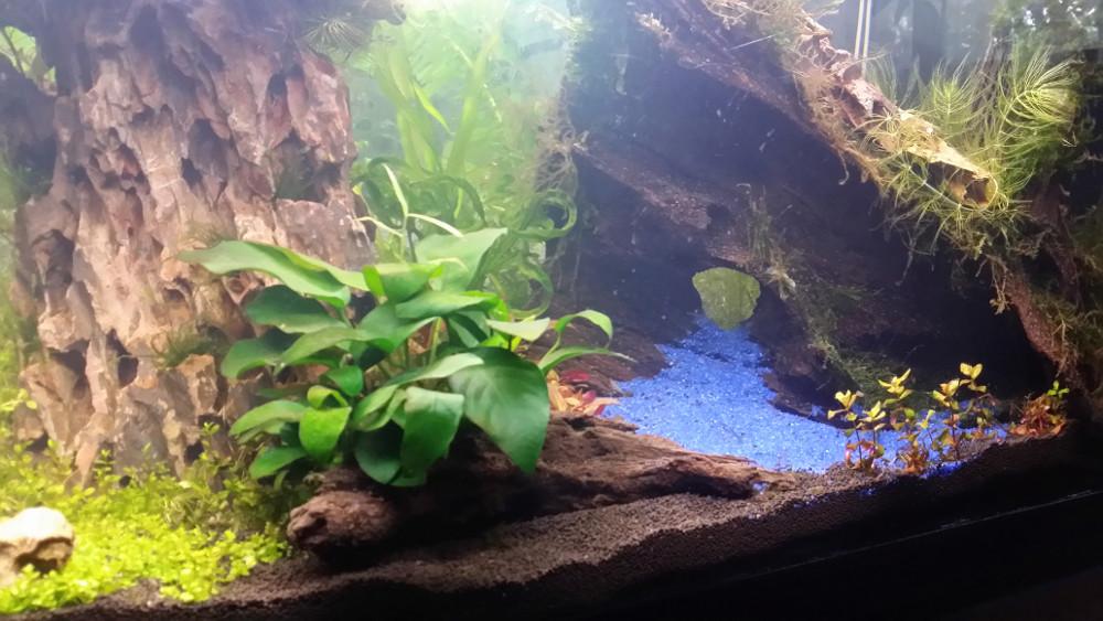 Le Christiany, l'aquarium pour les Guppys Christ10