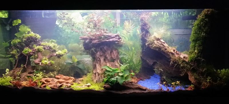 Le Christiany, l'aquarium pour les Guppys Christ11