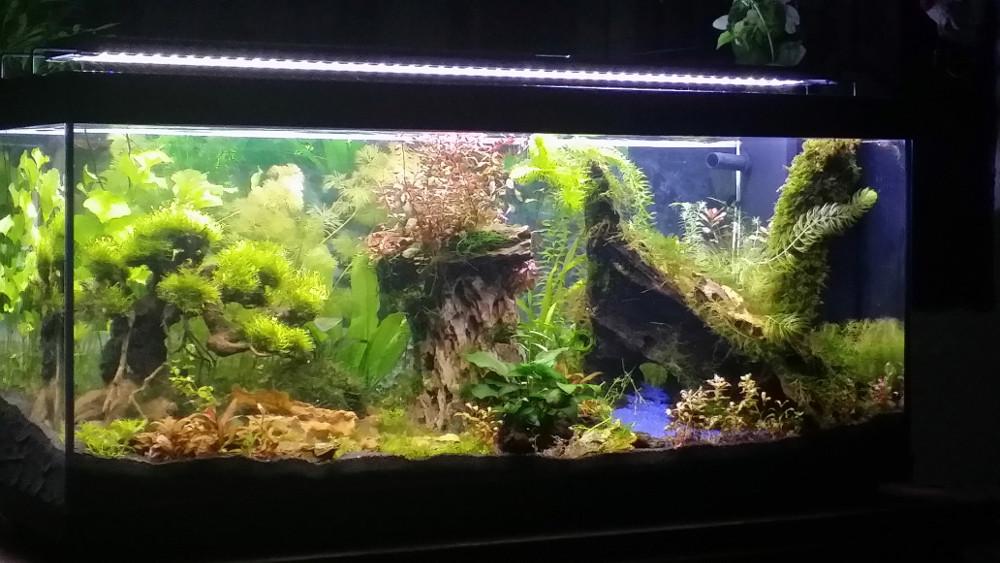 Le Christiany, l'aquarium pour les Guppys Christ12