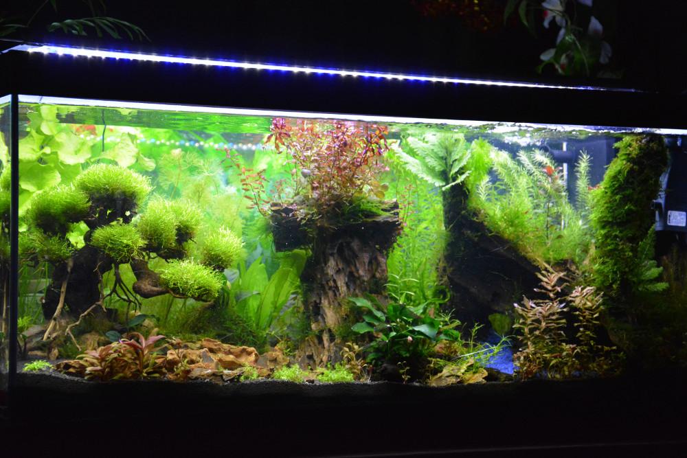 Le Christiany, l'aquarium pour les Guppys Christ13