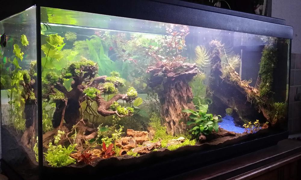 Le Christiany, l'aquarium pour les Guppys Le-chr11