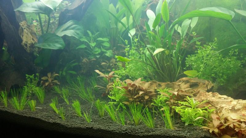 Mon RIO 180  Planta10
