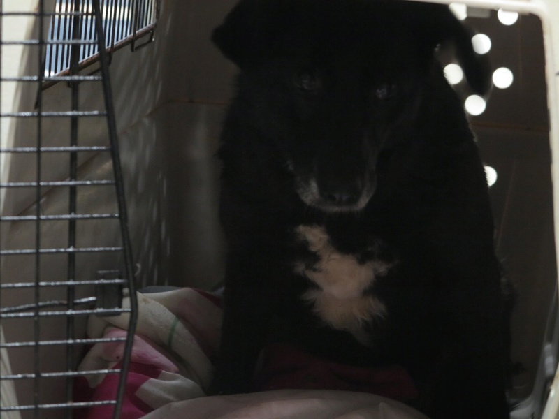 Bonita, femelle née en janvier 2015, taille moyenne  325