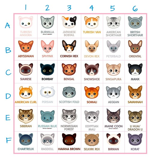 True Feline good Blog Razze_10