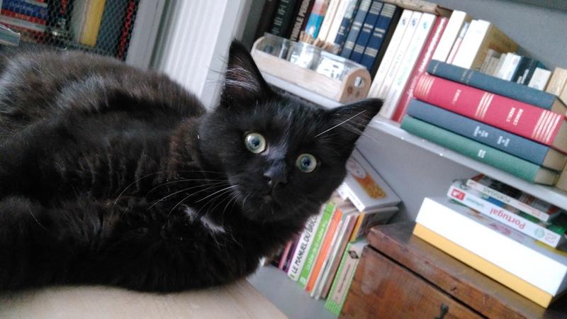 martin - MARTIN,chaton mâle noir,né le 08/06/16 Img_2012