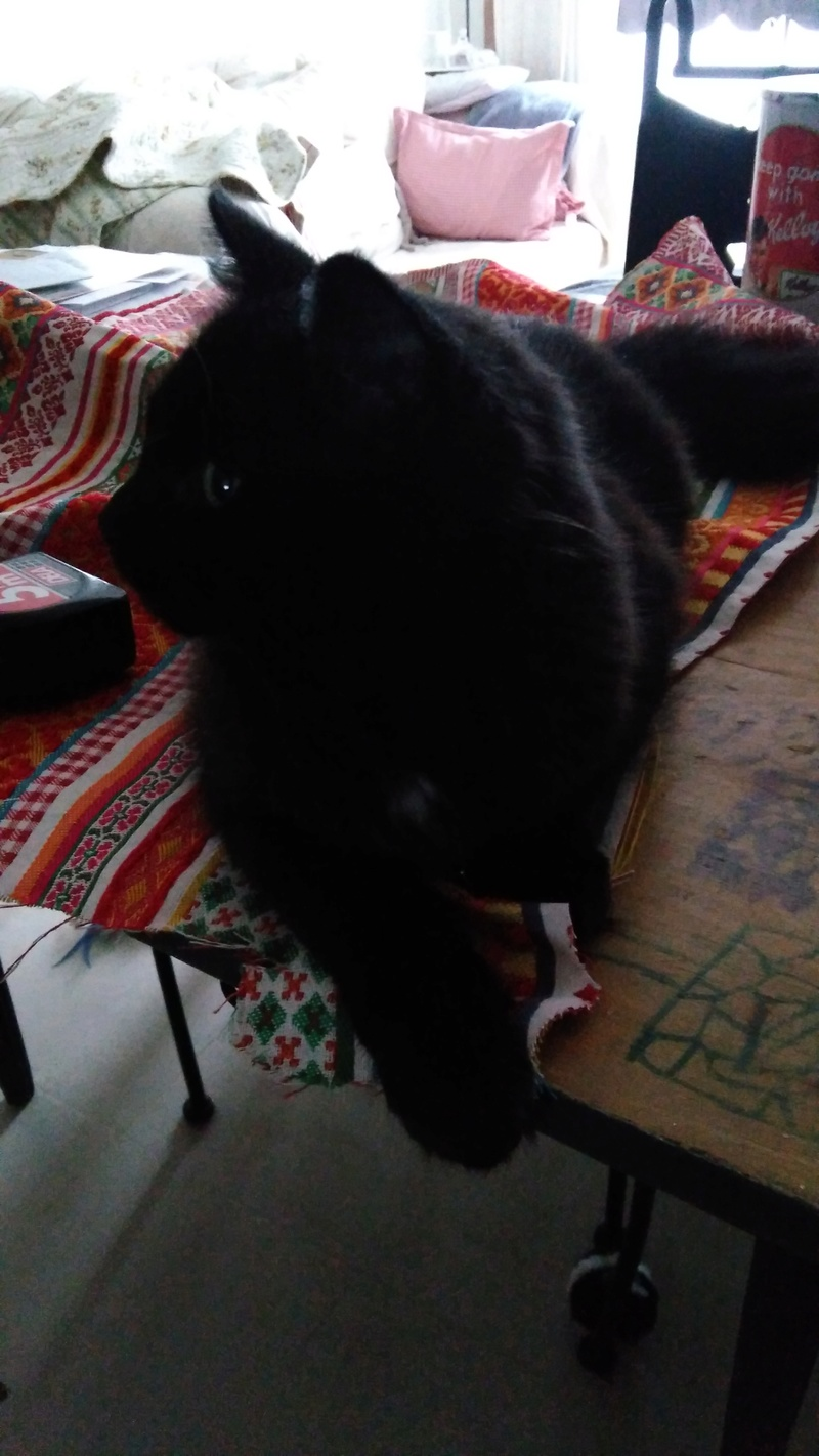 martin - MARTIN,chaton mâle noir,né le 08/06/16 Img_2017