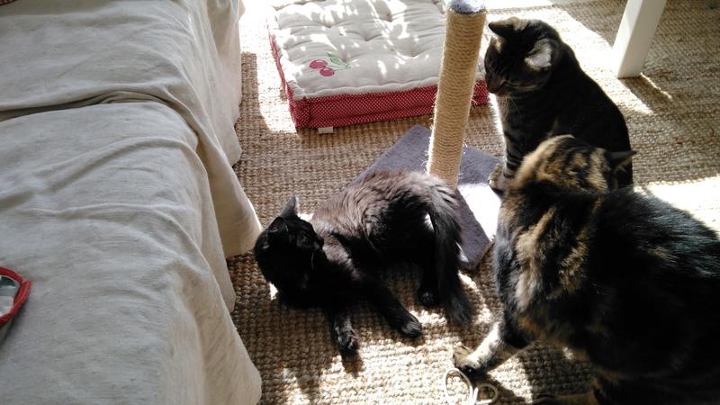 martin - MARTIN,chaton mâle noir,né le 08/06/16 Img_2019