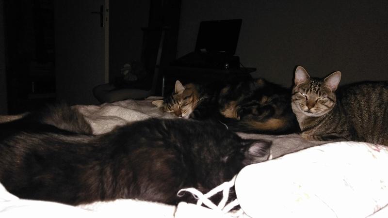 martin - MARTIN,chaton mâle noir,né le 08/06/16 Img_2020