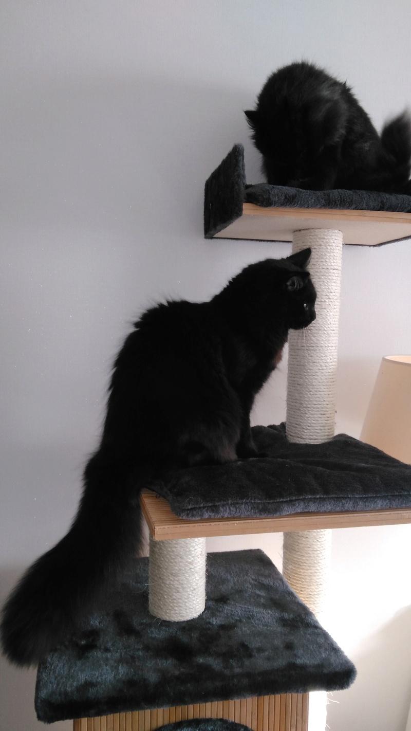 martin - MARTIN,chaton mâle noir,né le 08/06/16 Img_2023