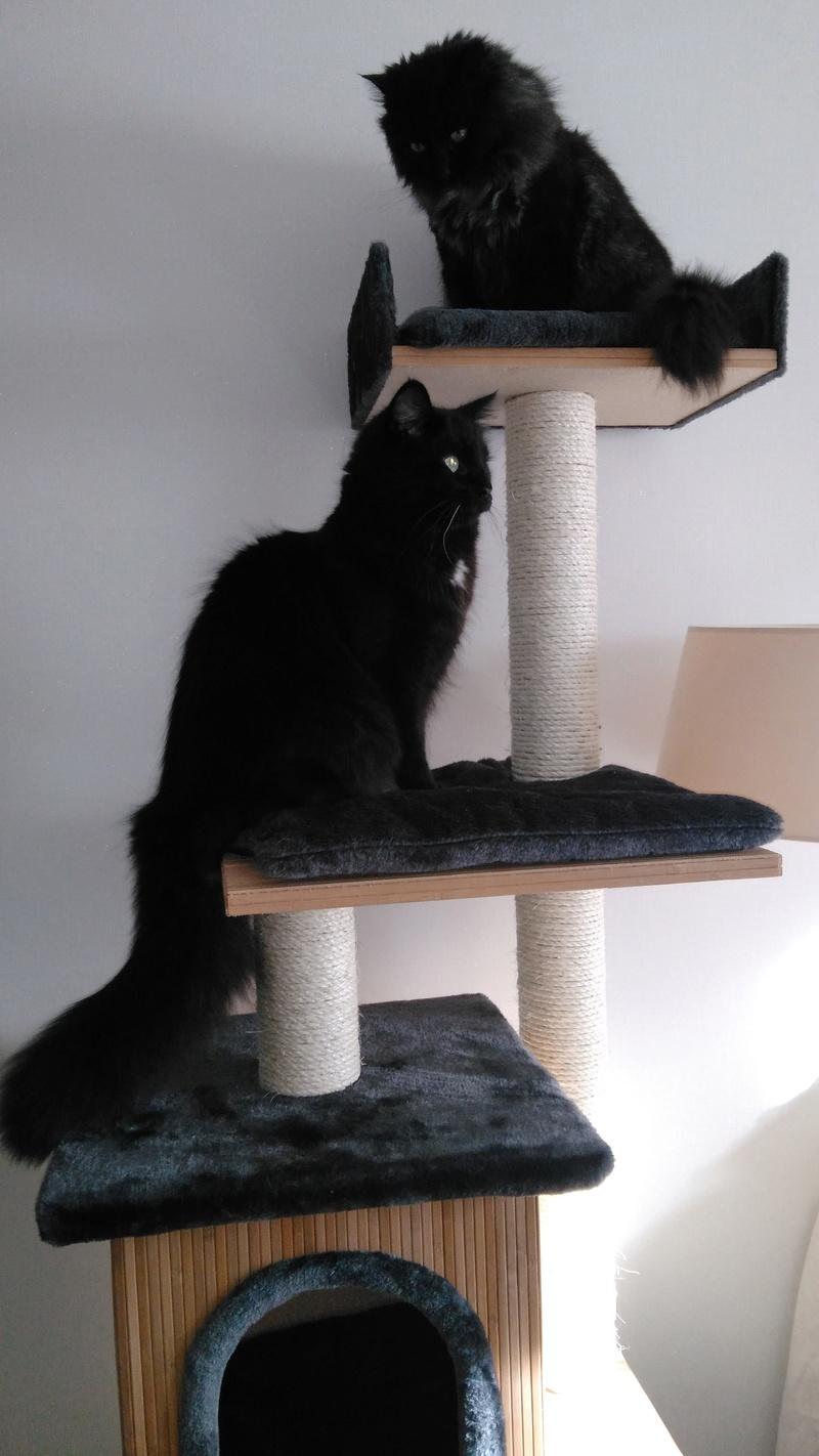 martin - MARTIN,chaton mâle noir,né le 08/06/16 Img_2024