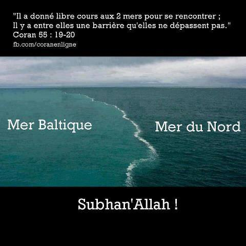 Les mers dans la science Coranique  15248310