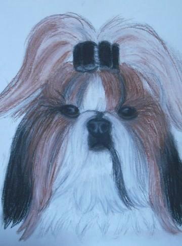 Portraits animalier et quelques dessins personnels 22221010