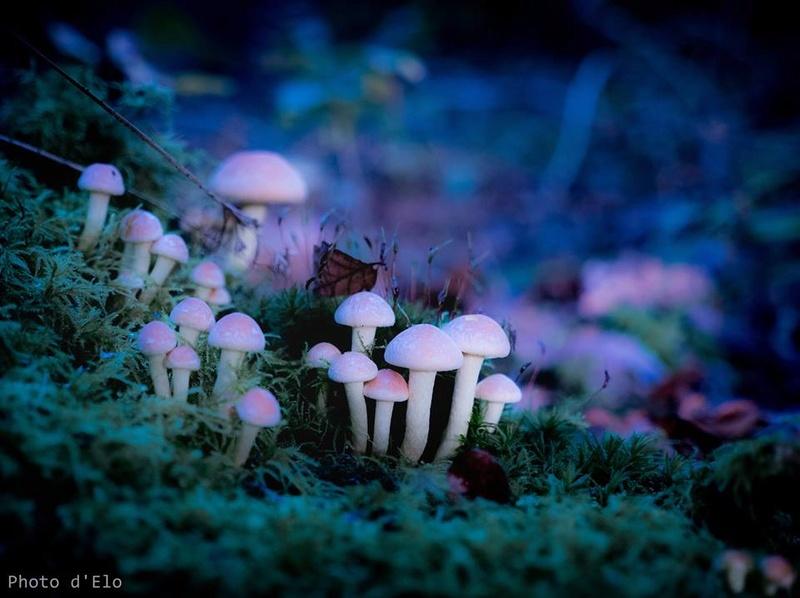 Aimez vous les champignons ? Champi10