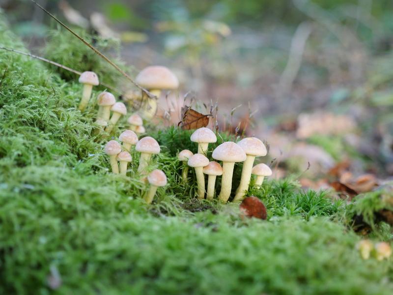 Aimez vous les champignons ? P1060510