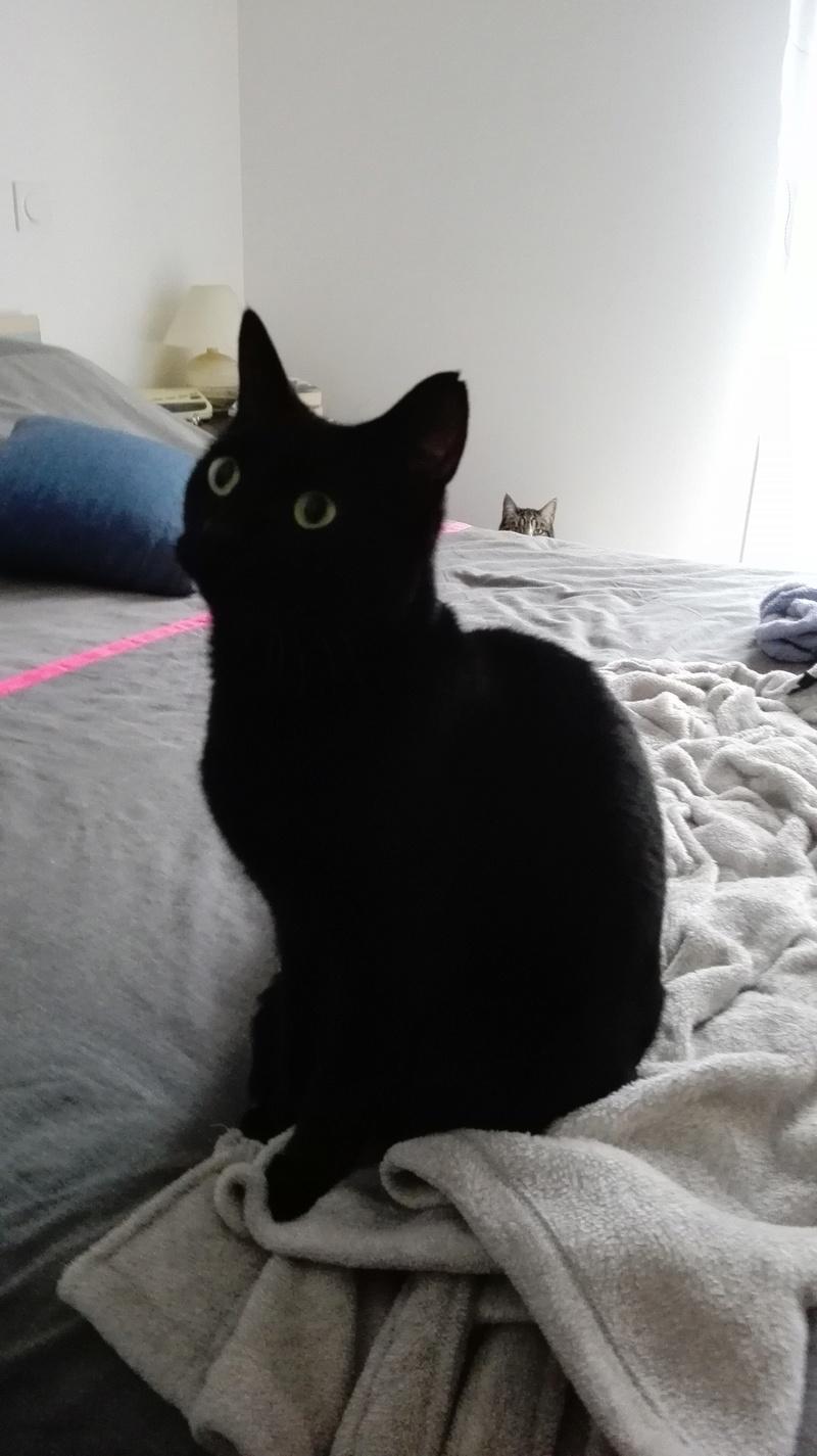 gaffy - GAFFY chat mâle européen noir né le 12/10/2011 Img_2011