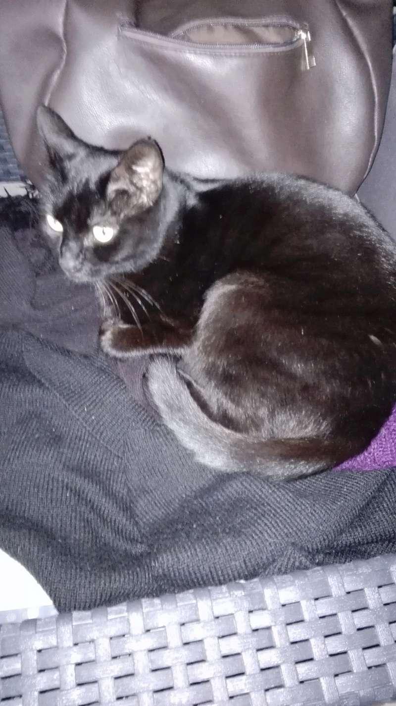 gaffy - GAFFY chat mâle européen noir né le 12/10/2011 Img_2013