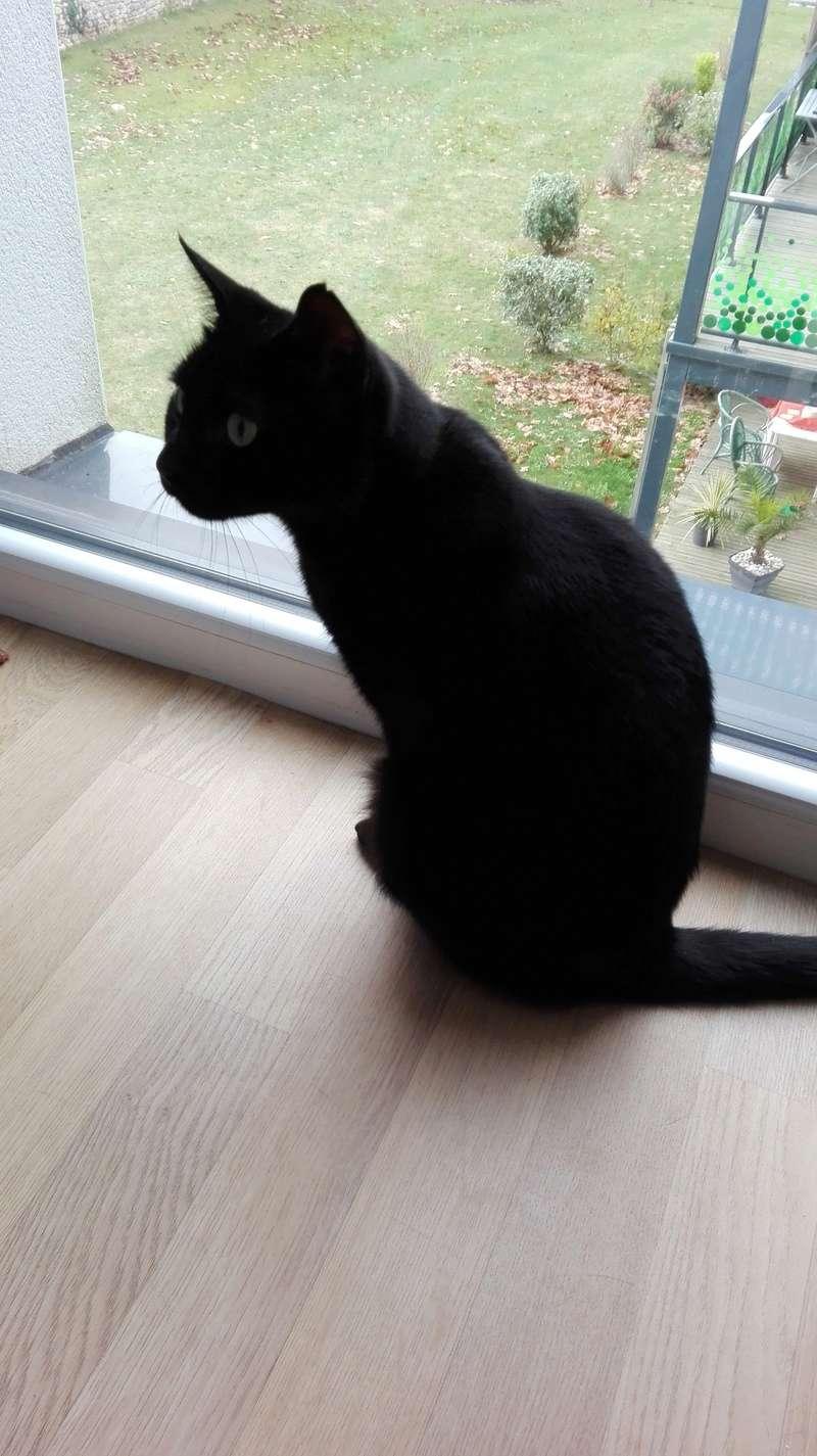 gaffy - GAFFY chat mâle européen noir né le 12/10/2011 Img_2014