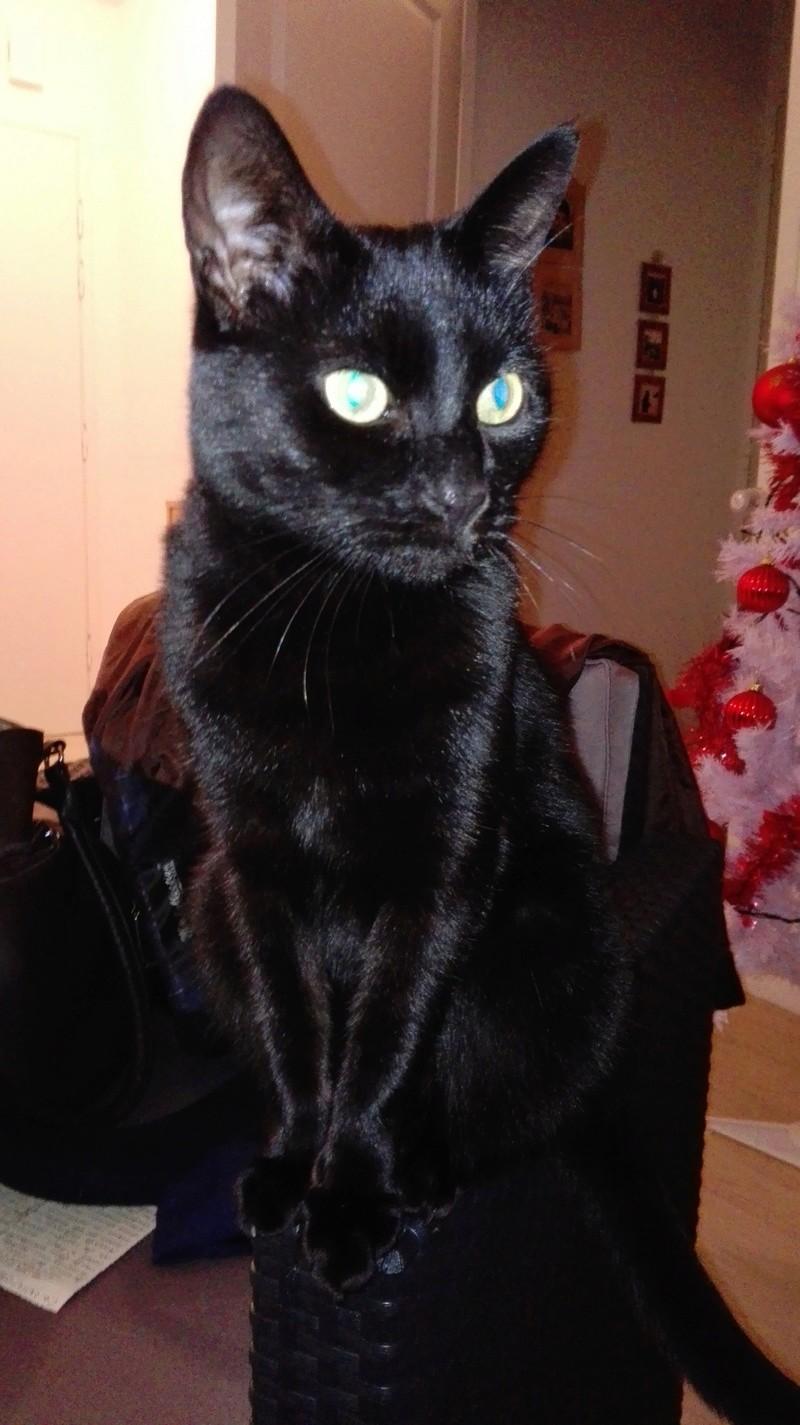 gaffy - GAFFY chat mâle européen noir né le 12/10/2011 Img_2017