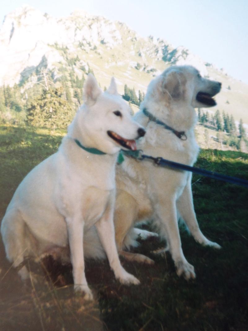 La belle vie de ma première chienne Huskie blanche  21610