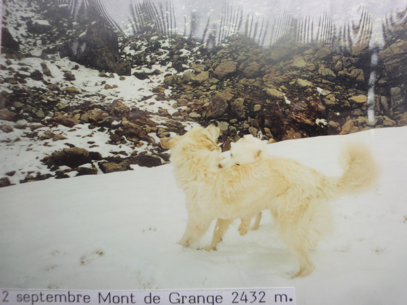 La belle vie de ma première chienne Huskie blanche  Facebo11