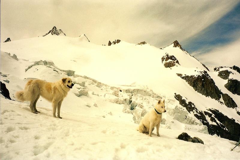 La belle vie de ma première chienne Huskie blanche  Nyk_au10