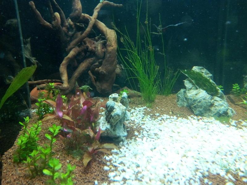 Lancement Aquarium 200L Img_2023