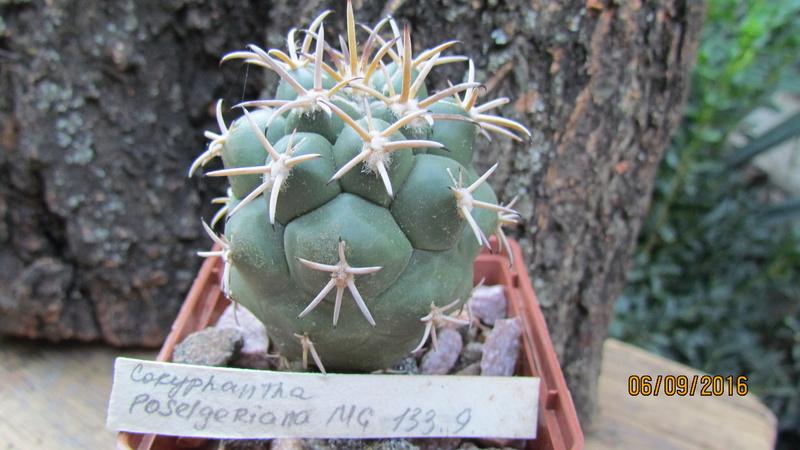Cactus under carbonate 7 C_pose11