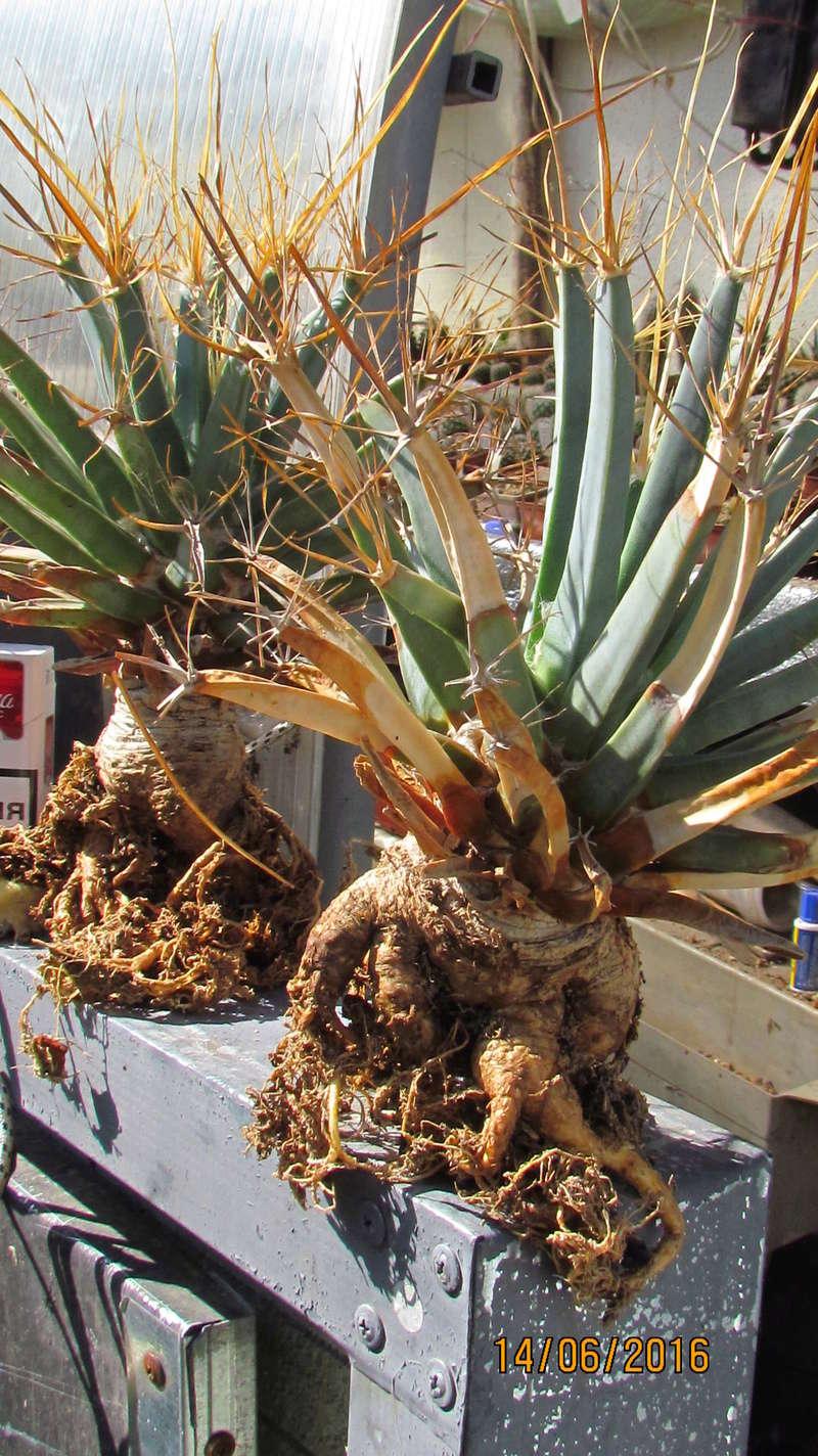 Cacti on logs. 4 Img_6011
