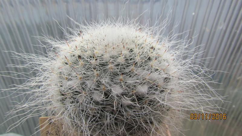 Cactus under carbonate 4 Img_6910