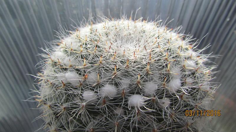Cactus under carbonate 4 Img_6911