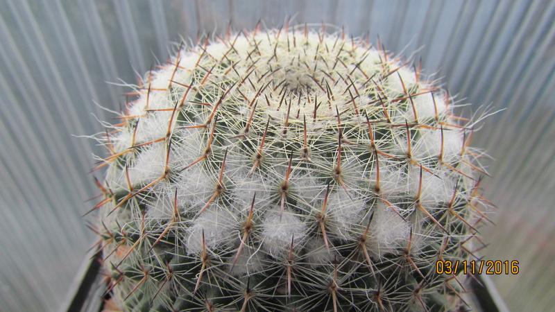 Cactus under carbonate 4 Img_6912