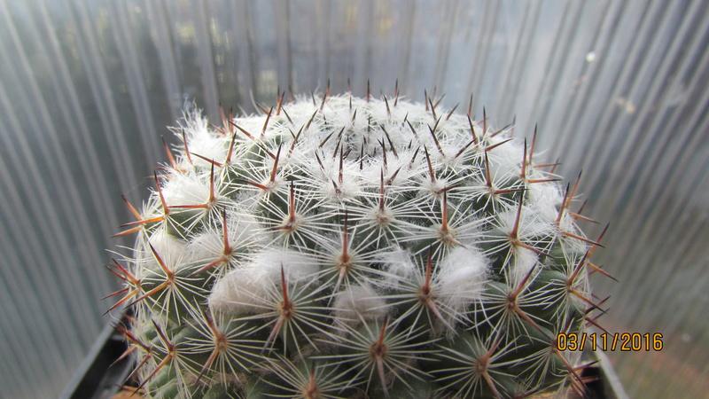 Cactus under carbonate 4 Img_6913