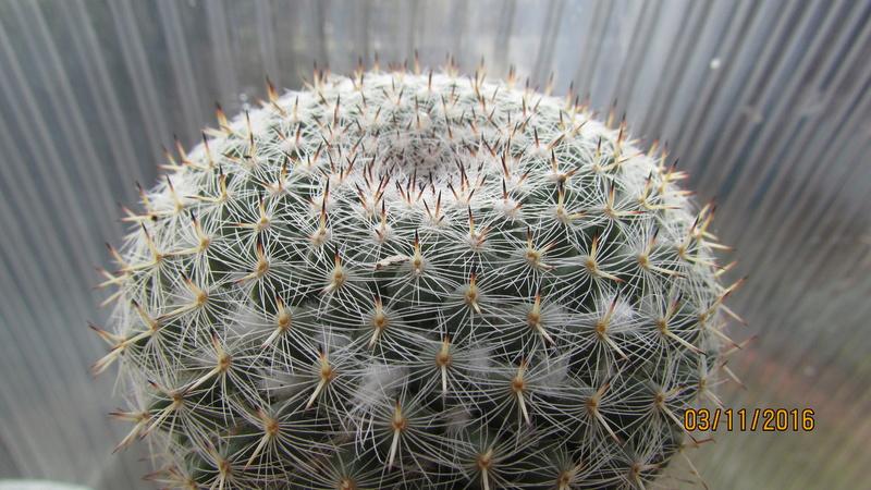 Cactus under carbonate 4 Img_6914
