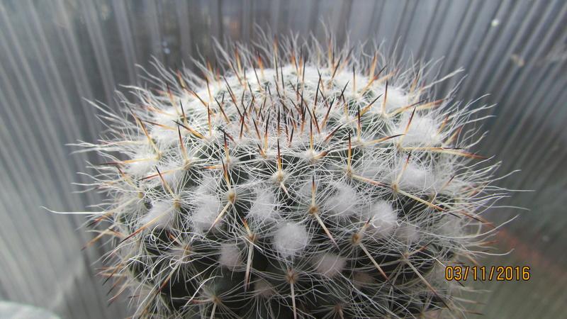 Cactus under carbonate 4 Img_6915