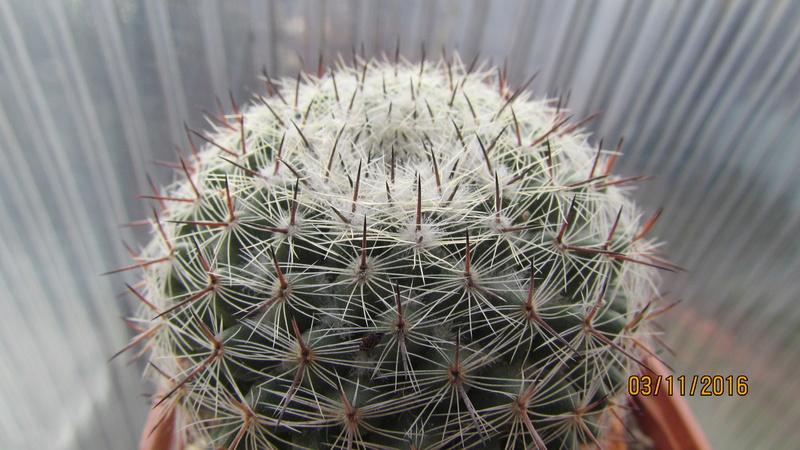 Cactus under carbonate 4 Img_6916