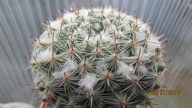 Cactus under carbonate 4 Img_6917
