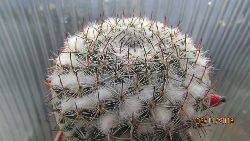 Cactus under carbonate 4 Img_6918